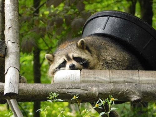 Control de fauna nociva
