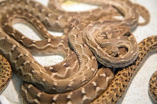 Serpientes control de plagas
